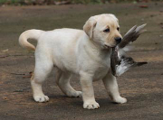 puppy with bird